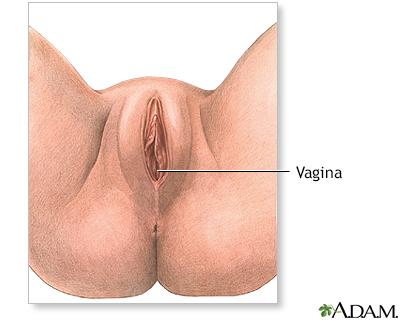 Female perineal anatomy